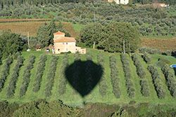 Our hot air balloon ride in Tuscany casts a shadow over the olive groves on this farmland