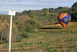 There isn't much room when ballooning in Tuscany for a landing. At the end of the balloon ride the balloon is floated above the vines to the track for deflation.